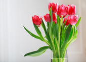 Beautiful red tulips — Stockfoto