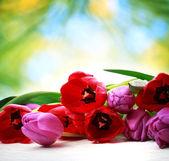 Tulips on shiny green background — Stock Photo