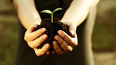 Female hand holding a young plant — Foto Stock