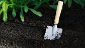 Small shovel with ground — Stock Photo