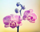 Pink Orchid on Yellow Backround — Stock Photo