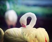 Yalnız beyaz flamingo — Stok fotoğraf