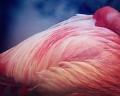 粉红色的火烈鸟 — 图库照片