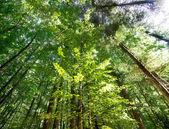 Wieved madeira de faia de baixo — Foto Stock
