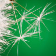 Dandelion close up with dew — Stock Photo #15603849