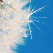 Poetic dandelion — Stock Photo