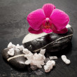 ORCHID SPA CONCEPT — Stock Photo