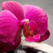 Orchid flower over wet stone — Photo