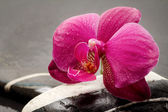 Orchid flower over spa background — Stock Photo
