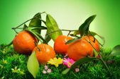 Fresh clementines over natural background — Stock Photo