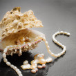 Pearl jewels  and oyster — Stockfoto