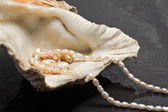Pearl jewels inside oyster — Stockfoto