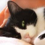 Постер, плакат: Green eyes cat having relax