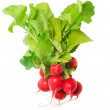 Radish bunch — Foto de Stock