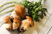 Boletus mushrooms and parsley — Stock Photo