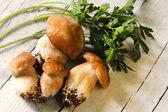 Hříbky a petrželkou — Stock fotografie