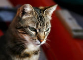Stray cat over colorful background — Stock Photo