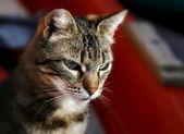 Stray cat over colorful background — Stok fotoğraf