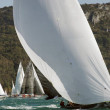 Stock Photo: Regattat Trieste, italy