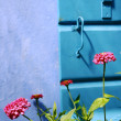 Stock Photo: Pink flowers against blue wall
