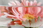 Gerbera flower inside water — Stock Photo