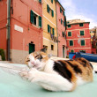 Stray cat plating with seagull feathermto Boccadasse, Genoa — Stock Photo #39696349