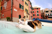 Stray cat plating with seagull feathermto Boccadasse, Genoa — Stock fotografie