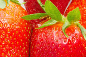 Fresh delicious strawberry — Stock Photo