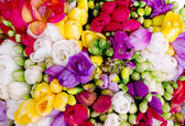 Freesia colorful bouquet — Stock Photo