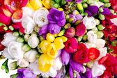 Freesia colorful bouquet — Foto Stock
