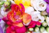 Red freesia inside colorful freesia bouquet — Stock Photo