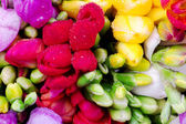 Bouquet of colorful freesia buds — Stock Photo
