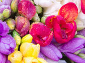 Colorful freesia bouquet — Stock Photo