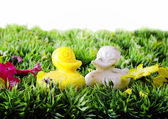 Goose shape soaps on flowering garden — Stock Photo