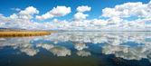 Riflessione lago fiore — Foto Stock