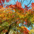 Stock Photo: Autumn Color