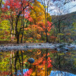 Beautiful color reflection — Stockfoto