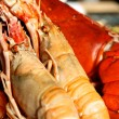 Giant Lobster — Stock Photo #38160337