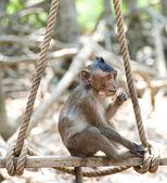 Cute infant Monkey — Stock Photo