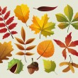 A collection of colorful autumn leaf designes. — Stock Vector