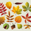 A collection of colorful autumn leaf designes. — Stock Vector #12814688