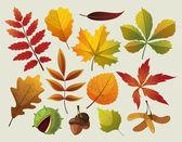 En samling av färgstarka hösten blad designes. — Stockvektor