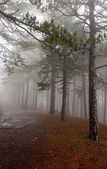 Forest road in fog — Stock Photo