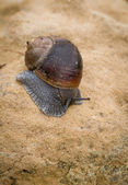 Snail, slow motion — Stockfoto