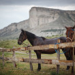 Stock Photo: Horses in landscape