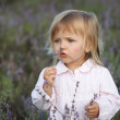 Beautiful little girl in a lavender field — Stock Photo