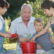 Children is helping her Grandfather in the garden — Stock Photo #32313289