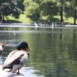Ducks on central park — Stock Photo
