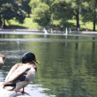 Ducks on central park — Stock Photo #13127219