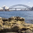 Sydney Harbour Bridge and Opera House from the Botanical Gardens — Stock Photo #23724561